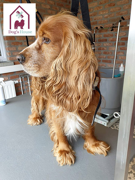 dog's house mettet salon de toilettage